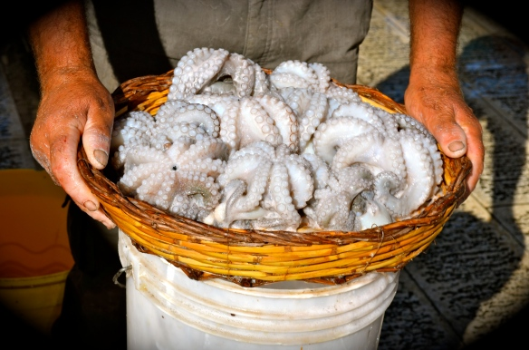 Octopus Bari