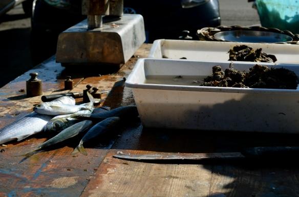 Fish Market Italy